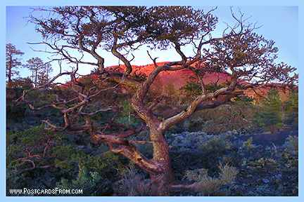 All images Copyright © 1997 - 2000 WriteLine. All Rights Reserved. Sunset Crater