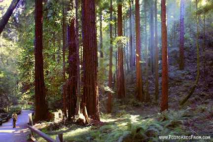All images Copyright © 1997 - 2000 WriteLine. All Rights Reserved. Muir Woods