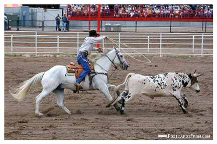 All images Copyright © 1997 - 2000 WriteLine. All Rights Reserved. Rodeo