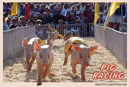 All images Copyright © 1997 - 2000 WriteLine. All Rights Reserved. Pig Racing