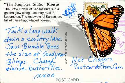 All images Copyright © 1997 - 2000 WriteLine. All Rights Reserved. Monarch butterfly